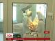 3 важкопоранених бійців із зони АТО гелікоптером доправили до Дніпропетровської обласної лікарні