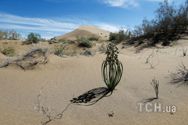 Скелети тварин і піщані дюни. Reuters показало неймовірні фото національного парку у Казахстані