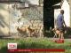 Зграї бездомних собак заполонили Миколаїв