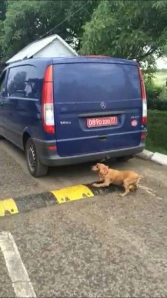На Закарпатті затримали авто з російськими дипломатичними номерами, яке перевозило контрабанду
