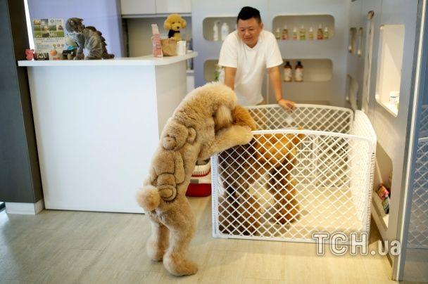 """Коти-динозаври й собаки-леви. У Тайвані тваринам зробили кумедні """"зачіски"""""""