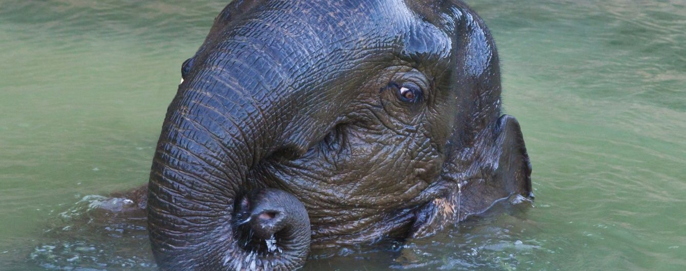 В пражском зоопарке посетителям показали новорожденного слоненка