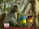 Німецька коала не вгадала рахунок майбутнього матчу і втратила довіру вболівальників