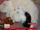 У Кривому Розі кішка стала названою мамою для крихітних білченят