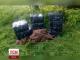 Кіньми контрабандисти намагалися переправити контрабандні цигарки через кордон на Буковині