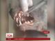 На Буковині вбили невідомого звіра, що нищив свійських тварин
