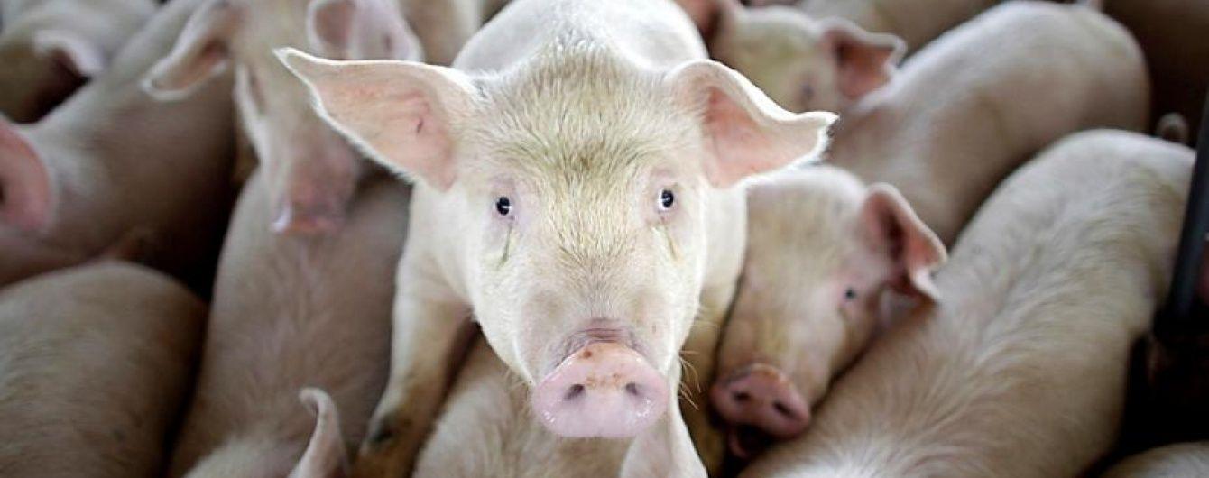 СОТ визнала незаконною заборону РФ на ввезення свинини з ЄС