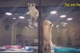 У Тайвані кошеня кумедно тікало із зоомагазину