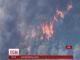 Пожежі у Каліфорнії винищили 3 сотні гектарів лісу