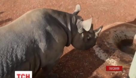 В Танзании на волю выпустили черного носорога