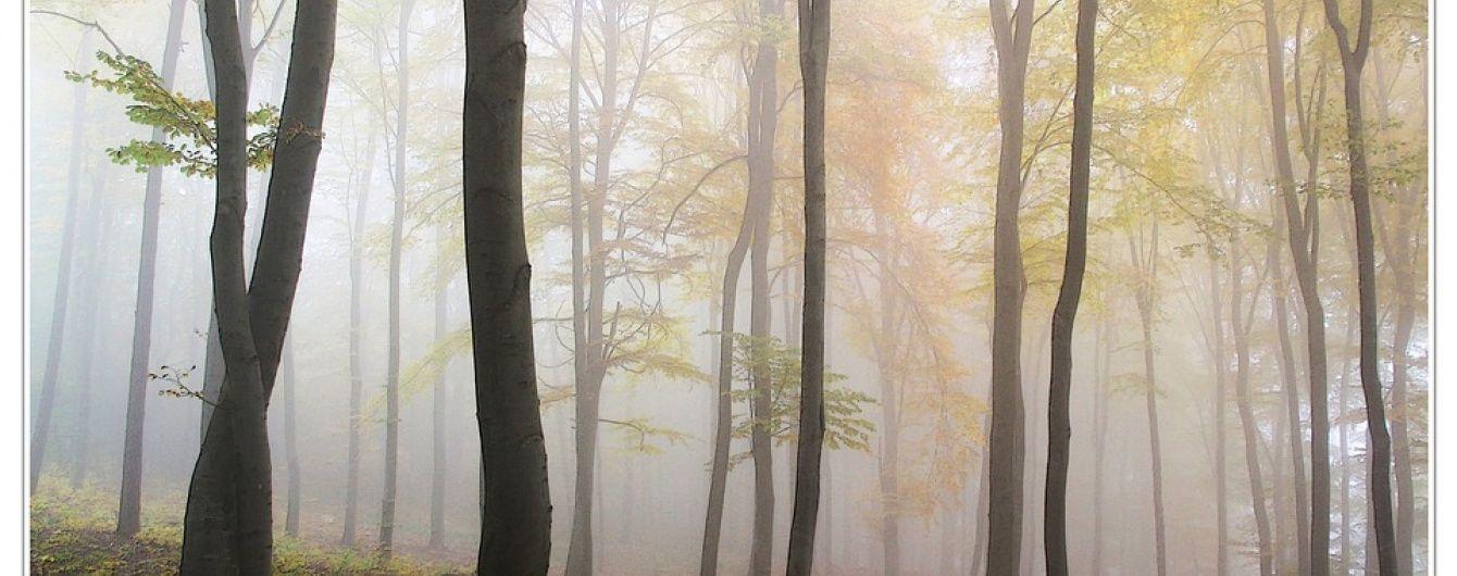 На Львівщині у лісі знайшли мертвою зниклу напередодні пенсіонерку