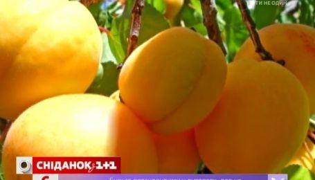 В Украине резко подешевели абрикосы