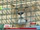Котяче поповнення у зоопарку Бердянська