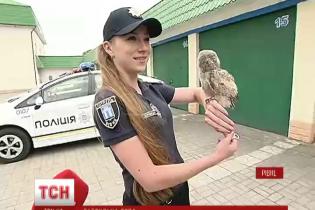 У Рівному в поліцію взяли сову Патрульку