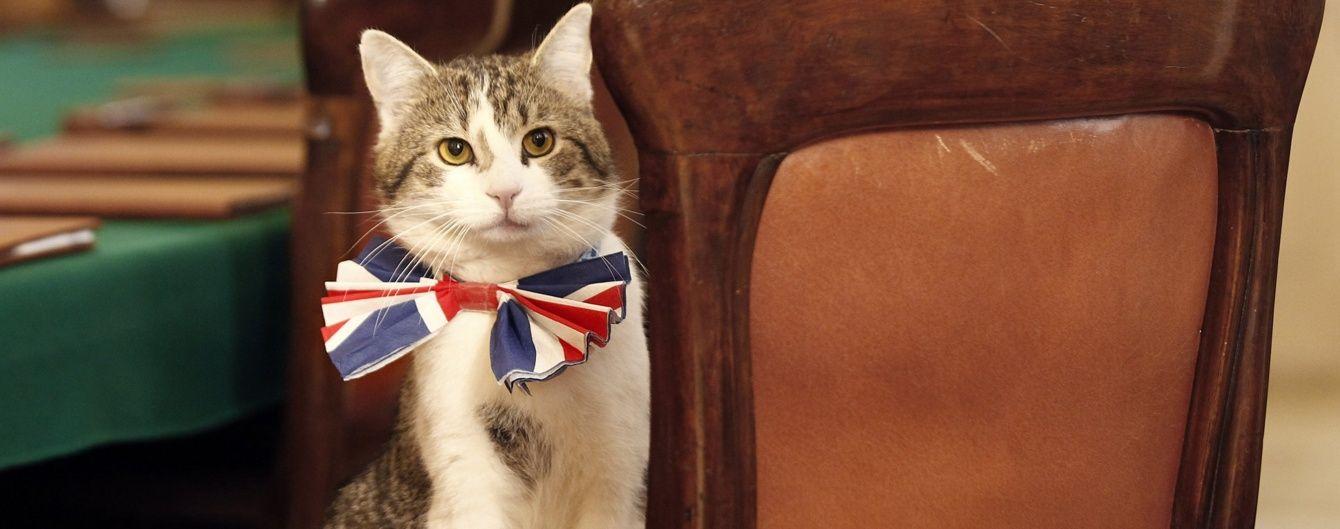 Знаменитого кота Ларрі з Даунінг-стріт залишать в резиденції прем'єра після відставки Кемерона