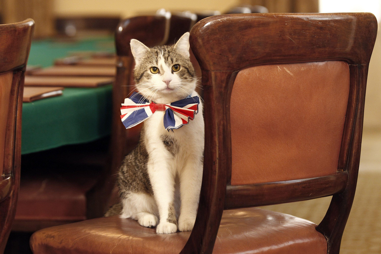 кіт з даунінг стріт, кіт кемерона