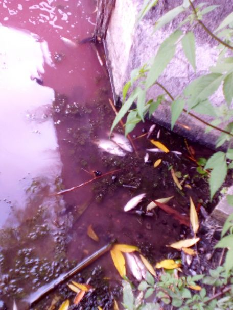 """Фахівці назвали винного у """"кривавому"""" забрудненні річки Стугна"""