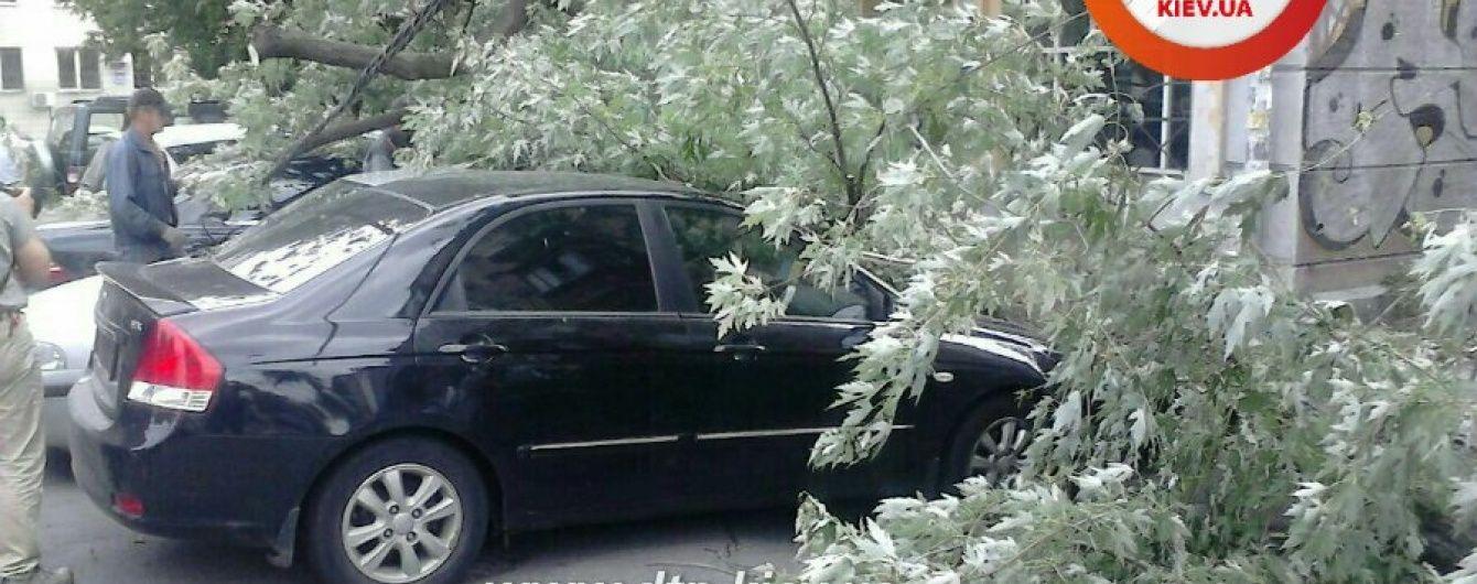 У Києві дерево побило приватні машини прикордонників і працівників СБУ