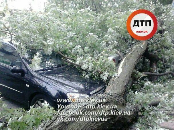 У центрі Києва дерево причавило п'ять припаркованих автівок