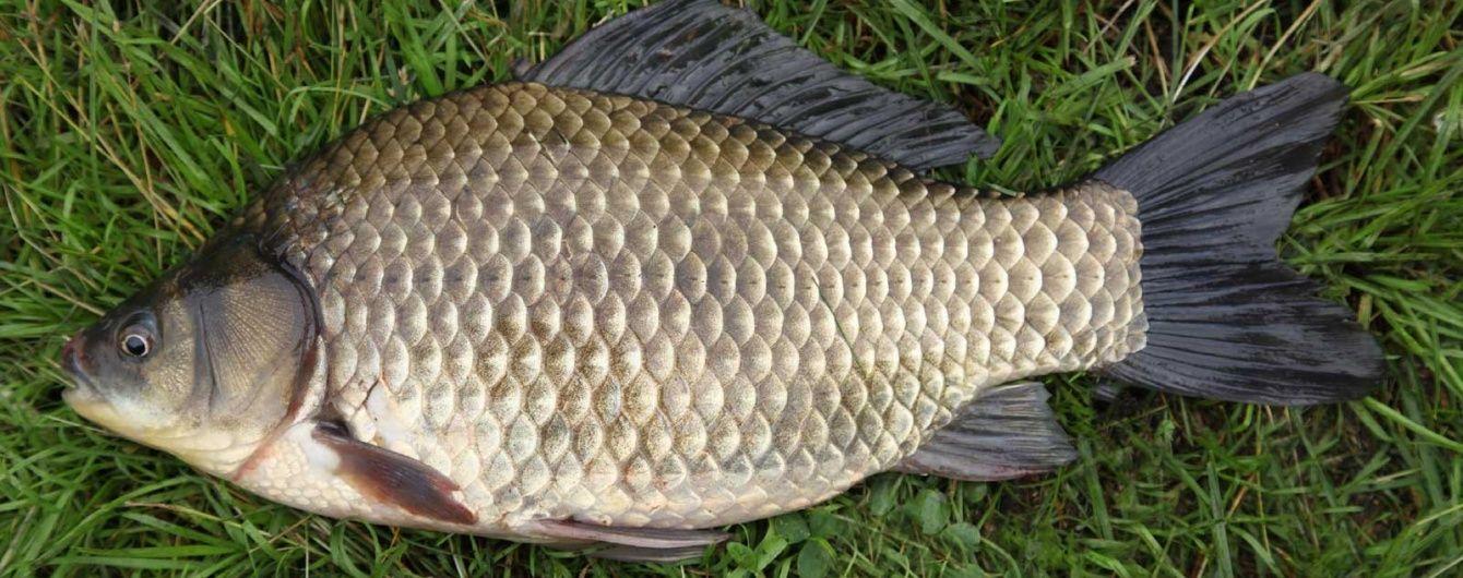 Без щуки, осетра та коропа, але з карасем і медузами: Дніпро катастрофічно бідніє на рибу