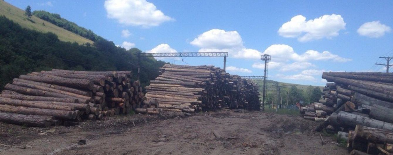 На Закарпатье раскрыли схему масштабных хищений леса