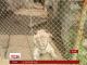 Порушення правил відвідування сафарі-парку під Пекіном закінчилось загибеллю туристки