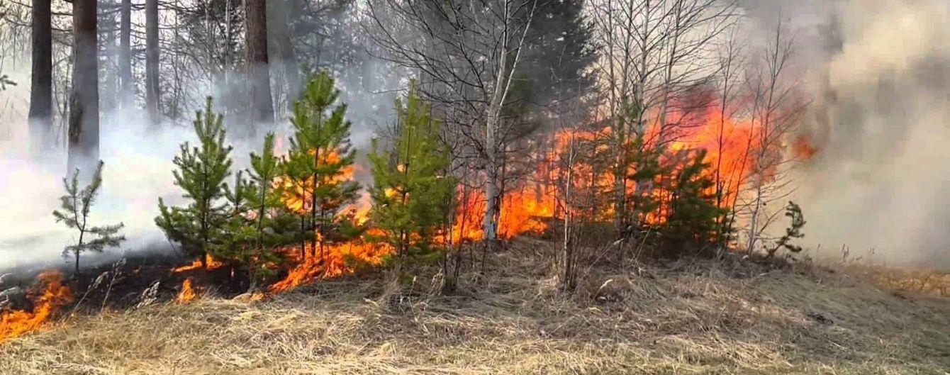 Активісти стверджують про масштабну пожежу лісу Новоград-Волинського полігону