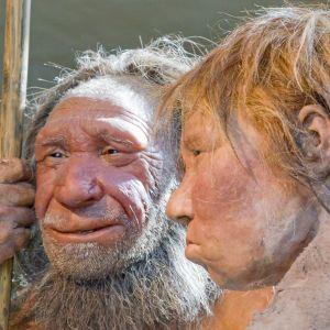 Неандертальцы могли впадать в спячку, чтобы пережить холодную зиму: исследователи сделали открытие