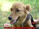 """Історія українського """"Хатіко"""": собака втекла із притулку і після 2 років повернулася до дому"""