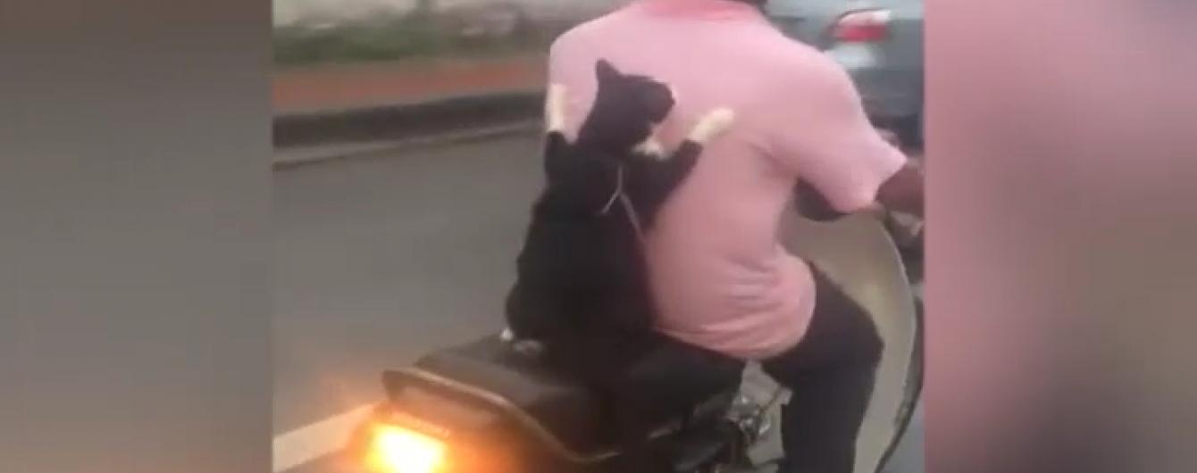 Кіт на мотоциклі полонив серця інтернет-юзерів
