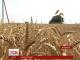 На Харківщині прокуратура вирішила долю нічийного врожаю, що займає 5 тисяч гектарів землі
