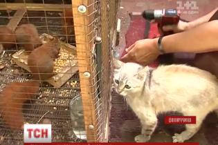 На Вінничині кішка вигодувала шістьох білченят, яких залишила власна мати