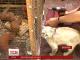 Неочікуване материнство: кішка вигодувала власним молоком 6 білченят на Вінниччині