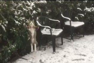 Мережу захопив кумедний кіт, що зачаровано ловить лапатий сніг
