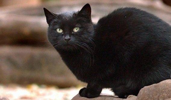 Кіт Блекі