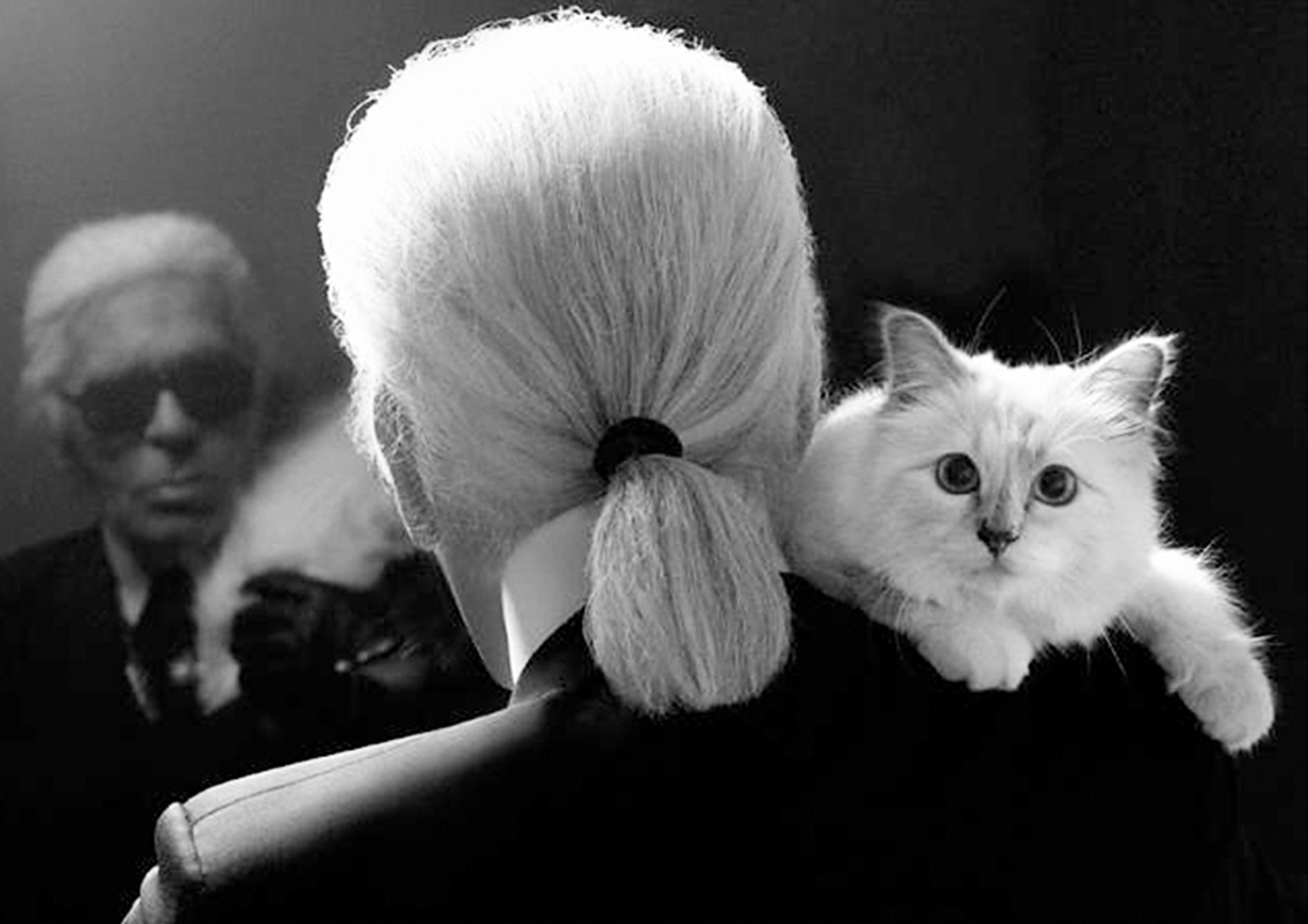 Кіт Лагерфельда