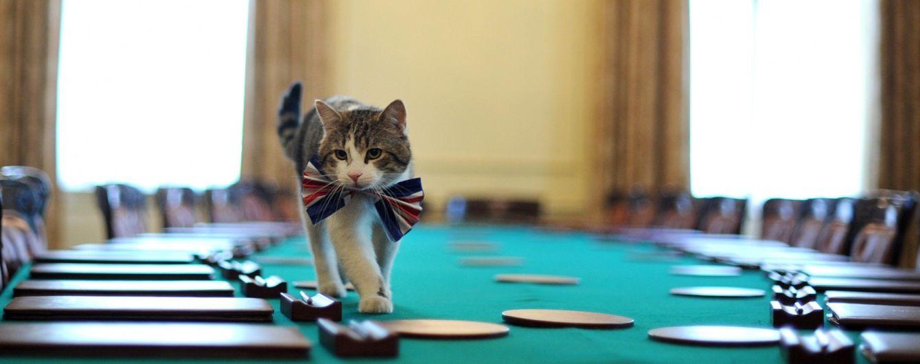 Зірки Instagram та коти-мільйонери. Найвідоміші пухнастики, які прославилися на весь світ