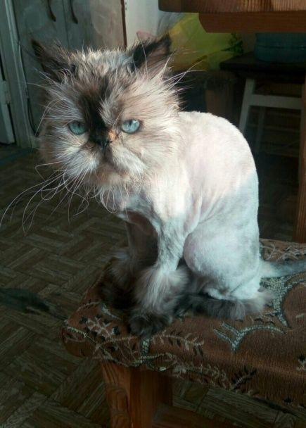 Всесвітній день кота. Як святкують улюбленці редакції ТСН.ua
