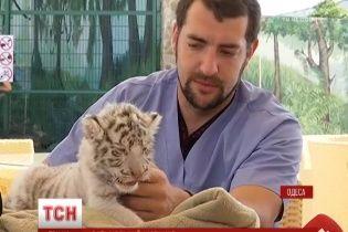 Одесит узяв до своєї оселі білого тигра