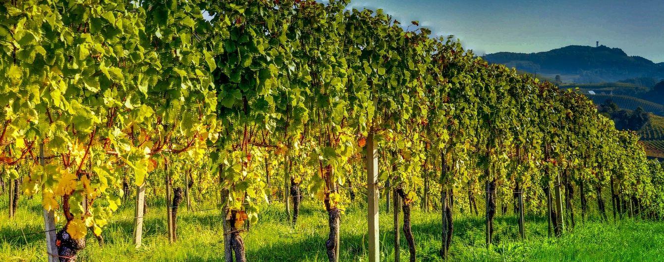 РПЦ буде виготовляти вино поруч із резиденцією патріарха Кирила