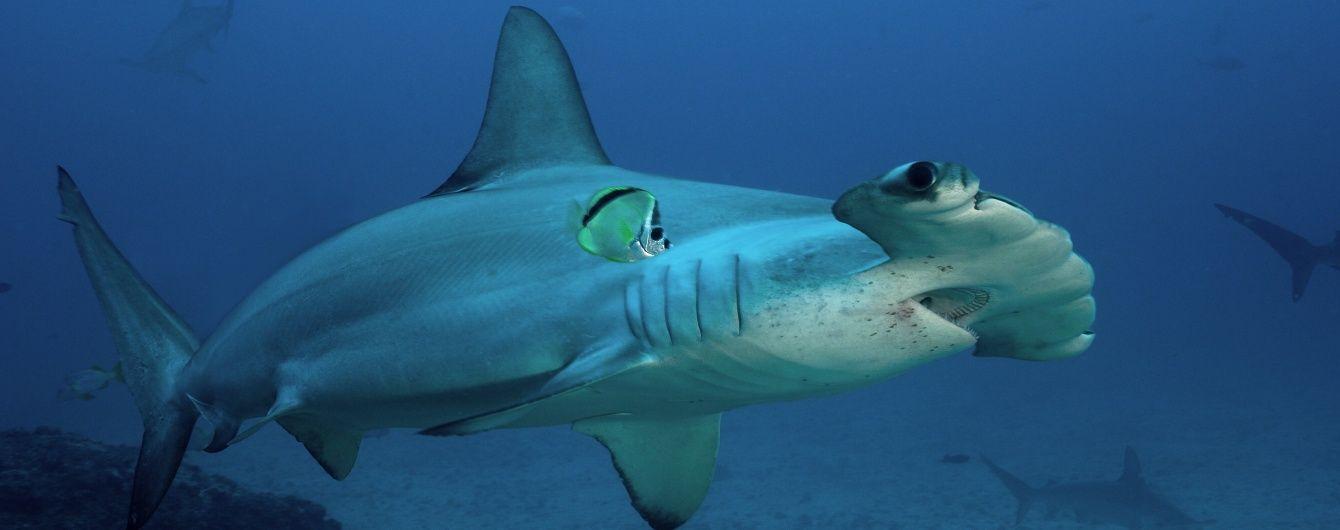 В Іспанії через акулу закрили пляж