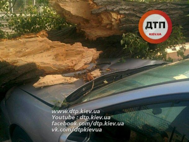 У Києві величезне дерево впало на припарковані авто
