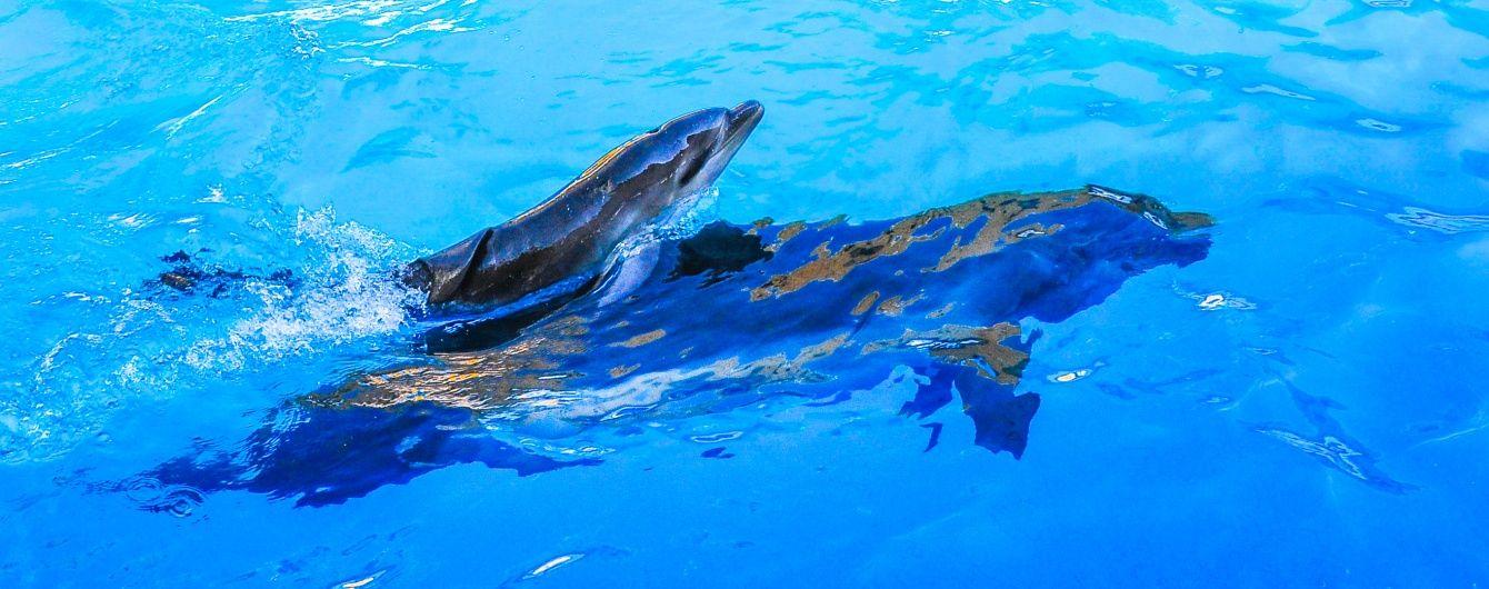 Угроза экологической катастрофы: строительство Керченского моста может вызвать гибель дельфинов