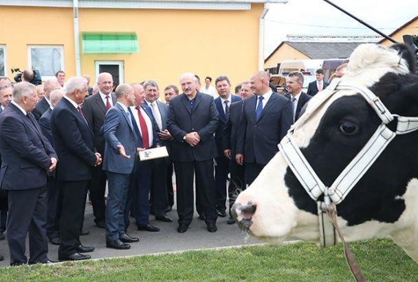 Лукашенку подарували корову