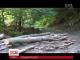 Професійна непридатність чи змова: понад 7 тисяч дерев вирубали та вивезли в Словаччину