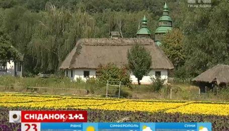 У День прапора в столиці відкриють найбільший квітковий килим
