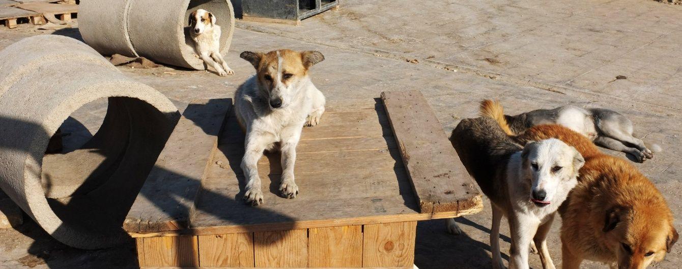 На Черкащині через масове отруєння собаки бились у конвульсіях на очах у людей