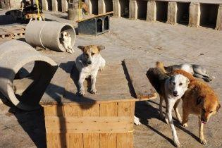 Под Киевом началась волна массового уничтожения животных