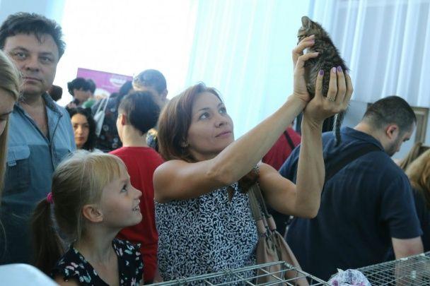 У пошуках будинку. У Києві стартував фестиваль котиків