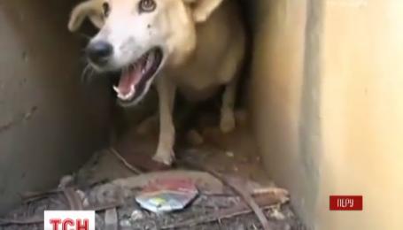 У Перу з підземного каналу врятували безпритульного собаку